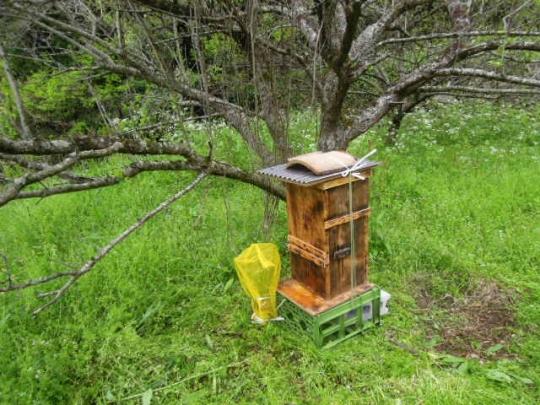 日本蜜蜂 待ち箱設置 H20704
