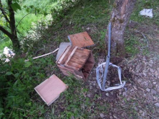 日本蜜蜂 熊被害1