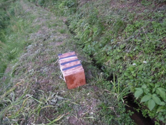 日本蜜蜂 熊被害1-2