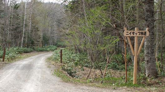 隆尾鉱山跡 (4)林道