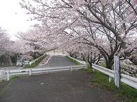20150331okazu5