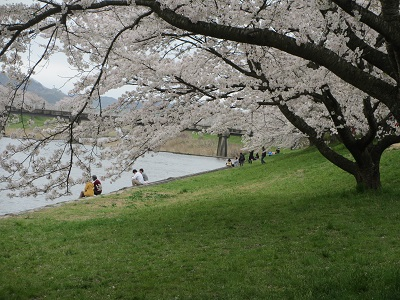 桜2015-8
