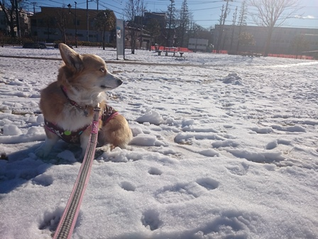 0201雪1