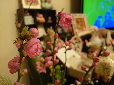 0303桃の花