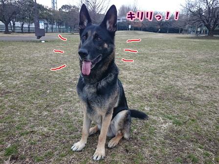 0307警察犬