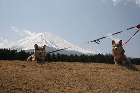 0411富士山6