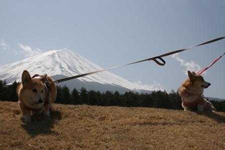 0411富士山7