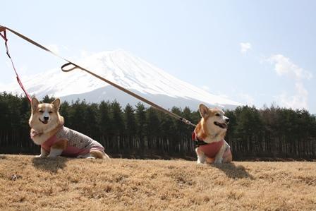 0411富士山8