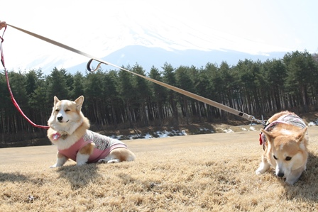 0411富士山9
