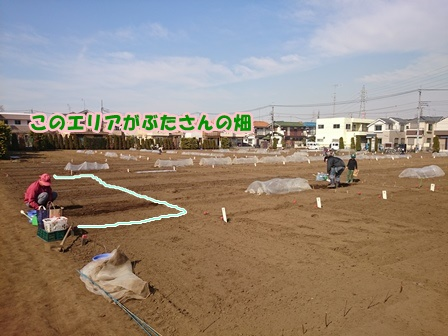 0415畑スタート2
