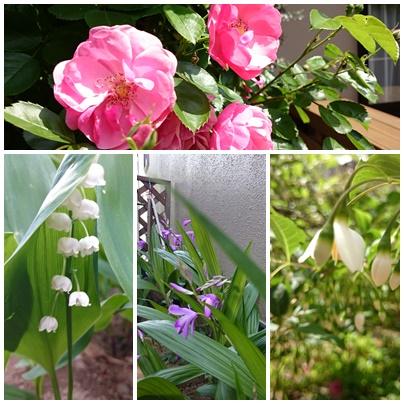 0503庭の花