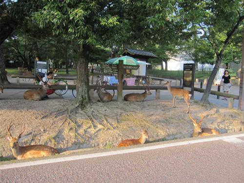 14-12-29-07-1-奈良公園