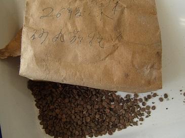 砂村丸なす 種子袋