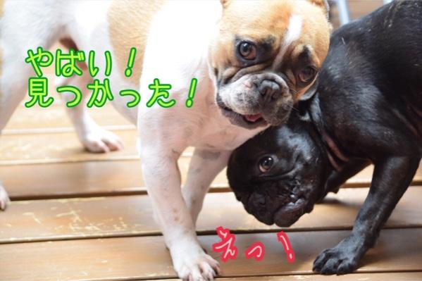 fc2blog_20150524231943fbb.jpg