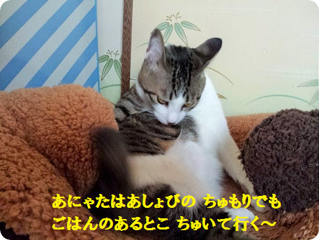 さそり座の男6
