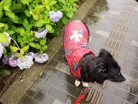 雨の日の散歩2