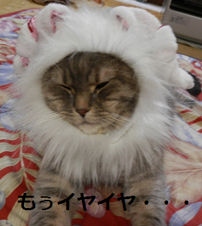 20150103_b.png