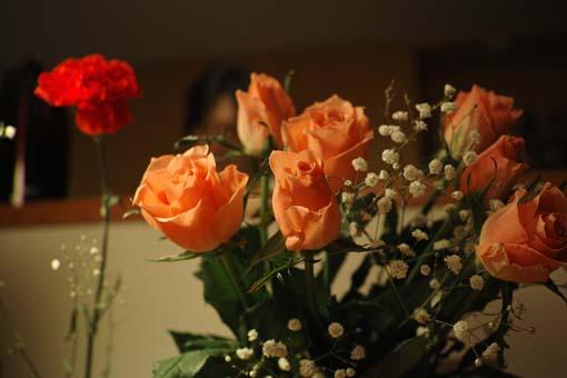Rose_June7_2015.jpg