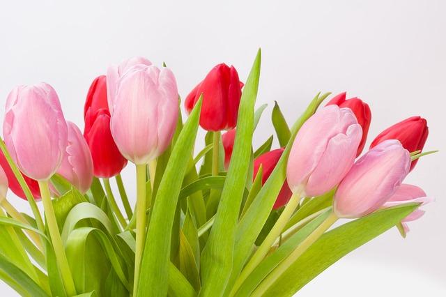 tulips-618574_640.jpg