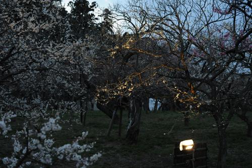 偕楽園の梅2015_14