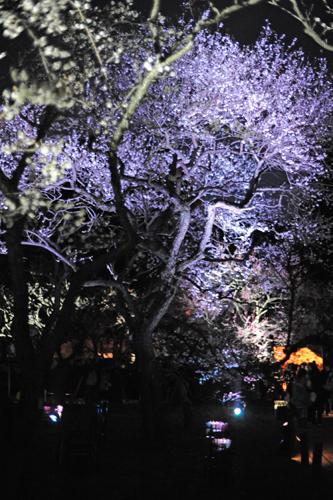 偕楽園の梅2015_20
