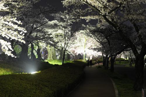 開成山公園10