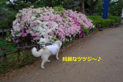 IMGP7904_convert_20150608203450.jpg