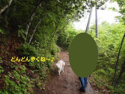 P5041189_convert_20150620221521.jpg