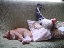 猫タンとニワトリ