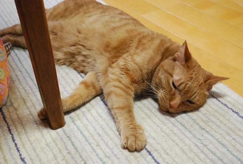 メンメ ハウスの外で寝てい.る