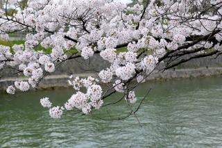 150402okazaki001.jpg