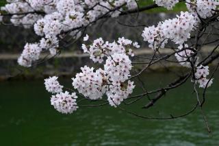150402okazaki002.jpg