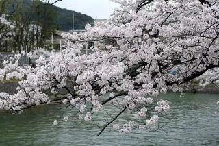150402okazaki015.jpg