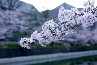 150403okazaki005.jpg