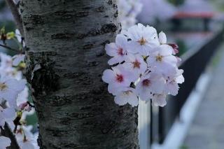 150403okazaki008.jpg
