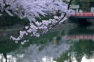 150403okazaki011.jpg