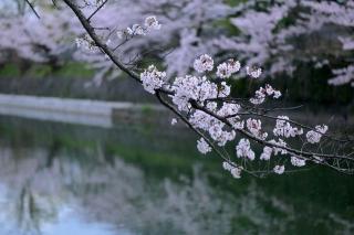 150403okazaki012.jpg