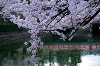 150403okazaki013.jpg