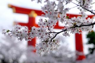 150403okazaki015.jpg