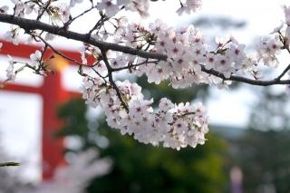 150403okazaki016.jpg