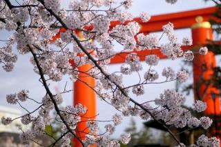 150403okazaki017.jpg