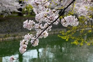 150403okazaki018.jpg
