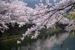 150403okazaki019.jpg