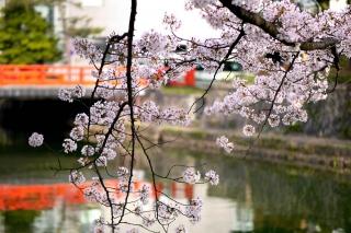 150403okazaki020.jpg