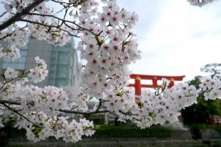 150403okazaki022.jpg