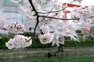 150403okazaki023.jpg