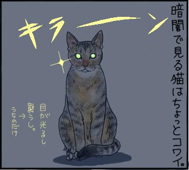暗闇の猫1
