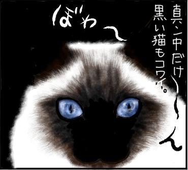 暗闇の猫4