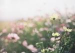 tomoちゃんとsheririnkoちゃんがママにくれたお花