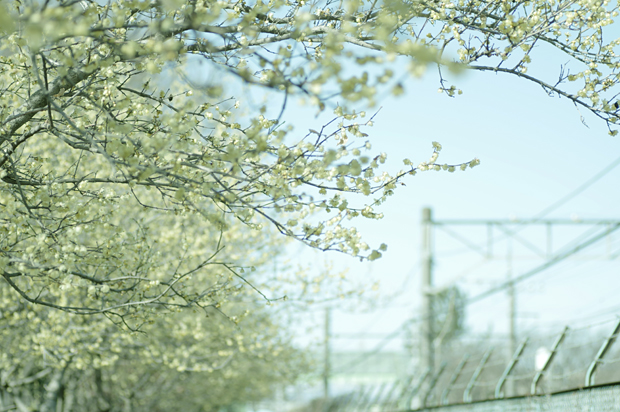 西武新宿線の横の公園~♪